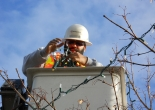 technician Kevin Brown puts lights on a tree