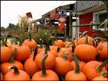 pumpkins stacked in Arlington, WA