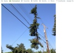 screenshot of storm damage Tweet by Avista Utilities