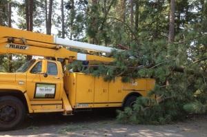 tree service removing large tree