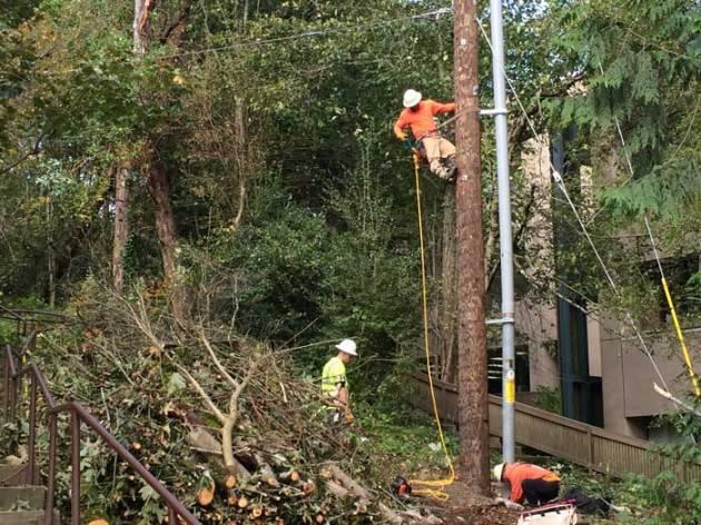 crews on pole doing repairs