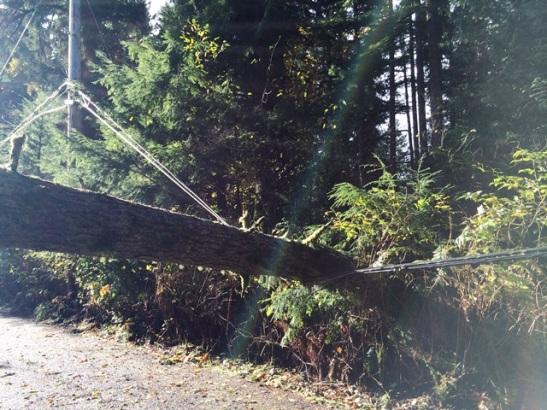 tree on lines