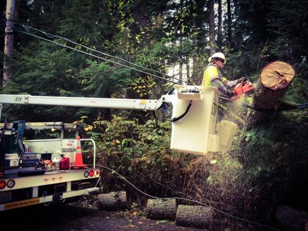 tech sawing tree