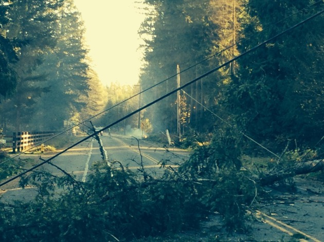 trees, poles and a fire on Black Diamond Road in Auburn