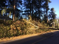tree and pole damage