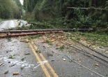 trees down on lines